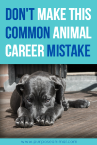 Thinking about an animal career? Avoid this animal career mistake that is very common! Plus take the FREE Animal Career Quiz.