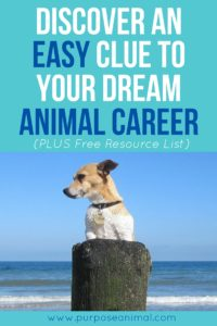 Discover this unique clue to your dream animal career. Plus take the free Animal Career Quiz!