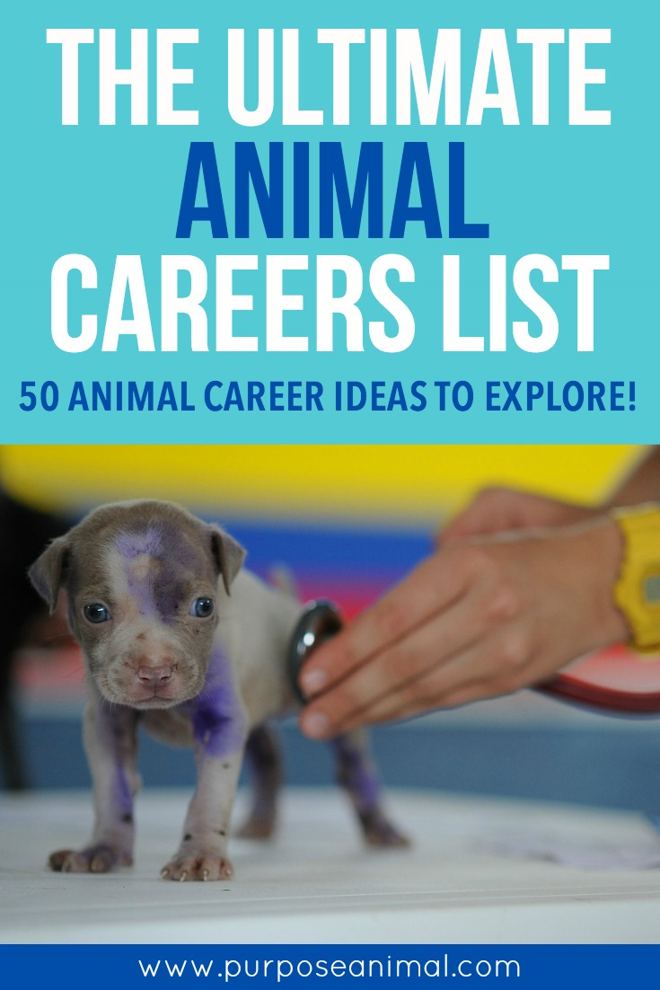 the ultimate animal careers list 50 animal career ideas to check this ultimate animal careers list 50 animal career ideas to explore