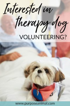 Interested in becoming a therapy dog volunteer? Check out this article with the inside scoop on what's involved. Plus take the FREE Animal Career Quiz!