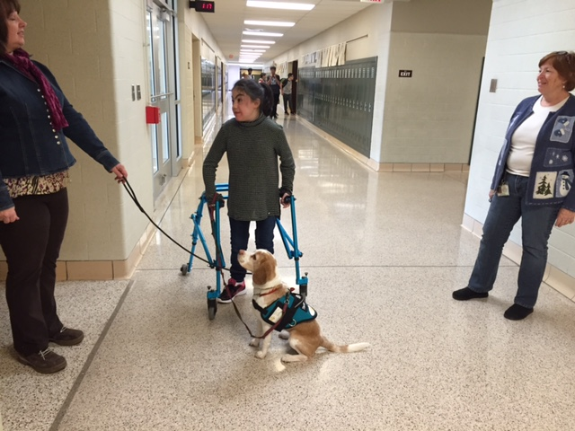 Therapy dog volunteer in action