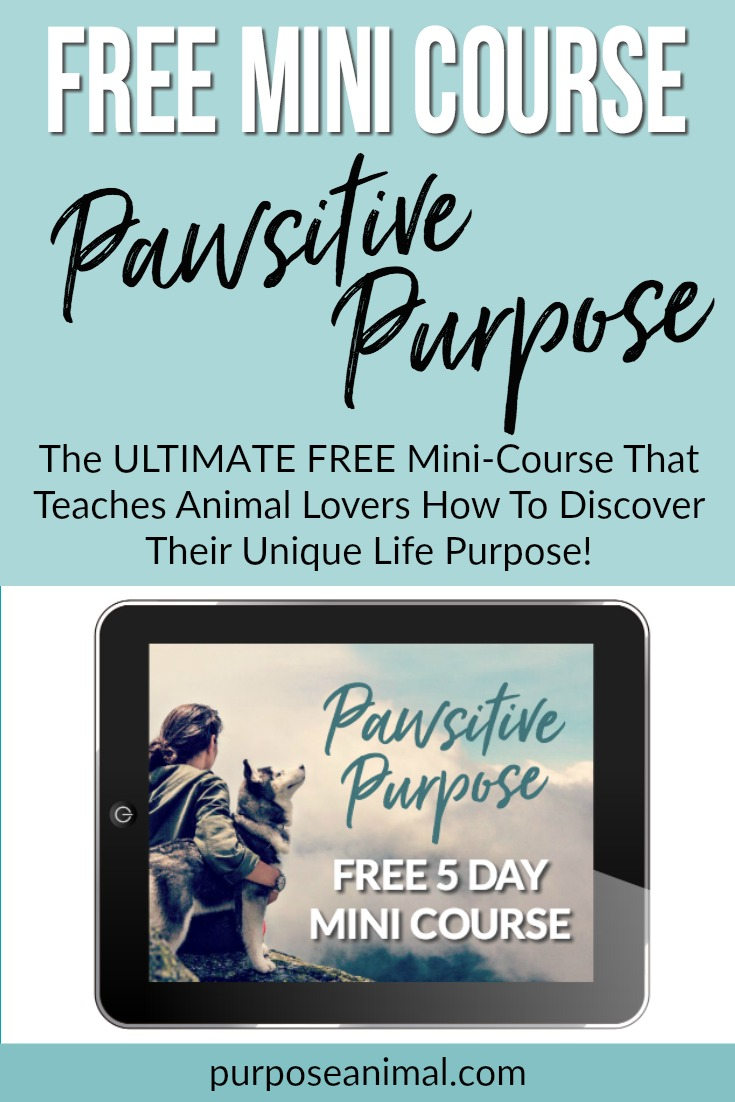 Pawsitive Purpose Free 5 Day Mini Course - This FREE mini course teaches animal lovers how to discover their unique life purpose. Check out the details here >>>&#8221; width=&#8221;735&#8243; height=&#8221;1102&#8243; class=&#8221;alignnone size-full wp-image-3622&#8243; /><img class=