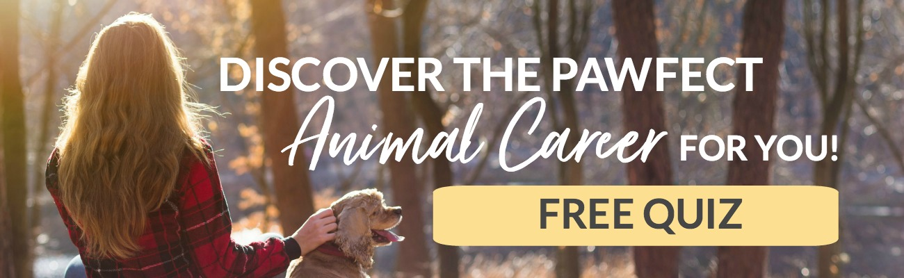 Animal Career Quiz - Take this FREE Animal Career Quiz and get your special report listing 20 animal-related careers that may suit your personality type!