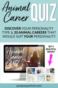 Check out this ANIMAL CAREER QUIZ! Answer a series of questions and find out YOUR Personality Type. You will also get a gorgeous report listing TWENTY animal careers that would suit YOU. Check it out here.