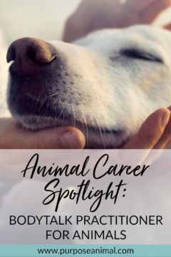 In this ANIMAL CAREER Interview Series, Di Scurr shares her career as  a BodyTalk Practitioner For Animals. You can read all about her journey to her dream animal career and what she has learned along the way! Plus FREE Animal Career Quiz