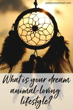 What is your dream animal lifestyle? Answer these questions to discover your dream lifestyle! Plus take the FREE Animal Career Quiz!
