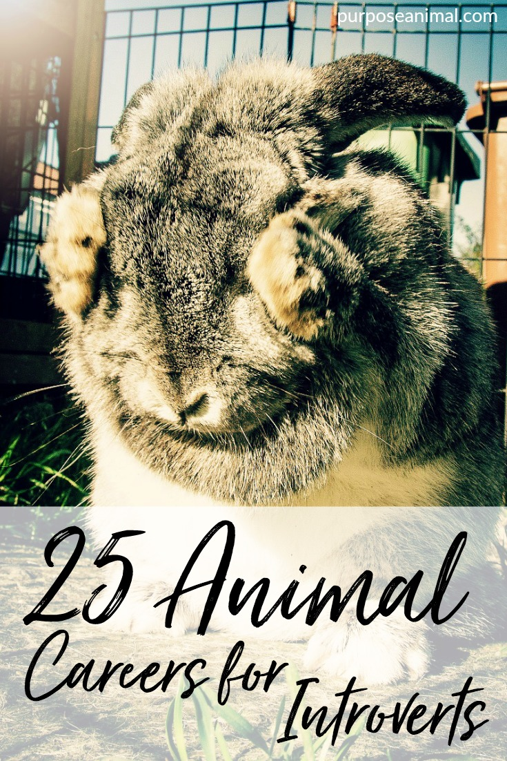 25 Animal Careers For Introverts: Interested in an animal career? Check out these 25 ideas for introverts. Plus take the FREE Animal Career Quiz.