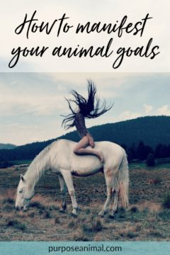 Want to manifest your animal goals: Check out these tips and tricks. Plus take the FREE Animal Career Quiz!