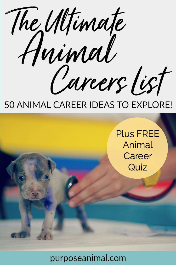 Check out this Ultimate animal careers list. 50 Animal Career Ideas to Explore. Plus take the FREE Animal Careers Quiz!