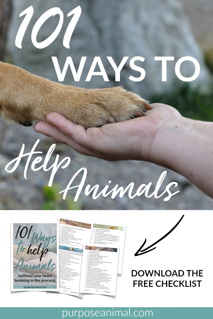 101 Ways To Help Animals (without your heart breaking in the process). Check out this list of creative ways to help animals. Also includes a FREE downloadable checklist for easy reference and inspiration.
