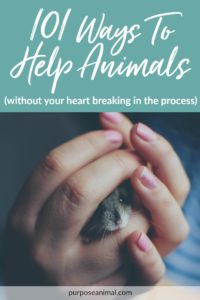 Check out this awesome list of 101 Ways To Help Animals (without you heart breaking in the process). Download the FREE Checklist for easy future reference.